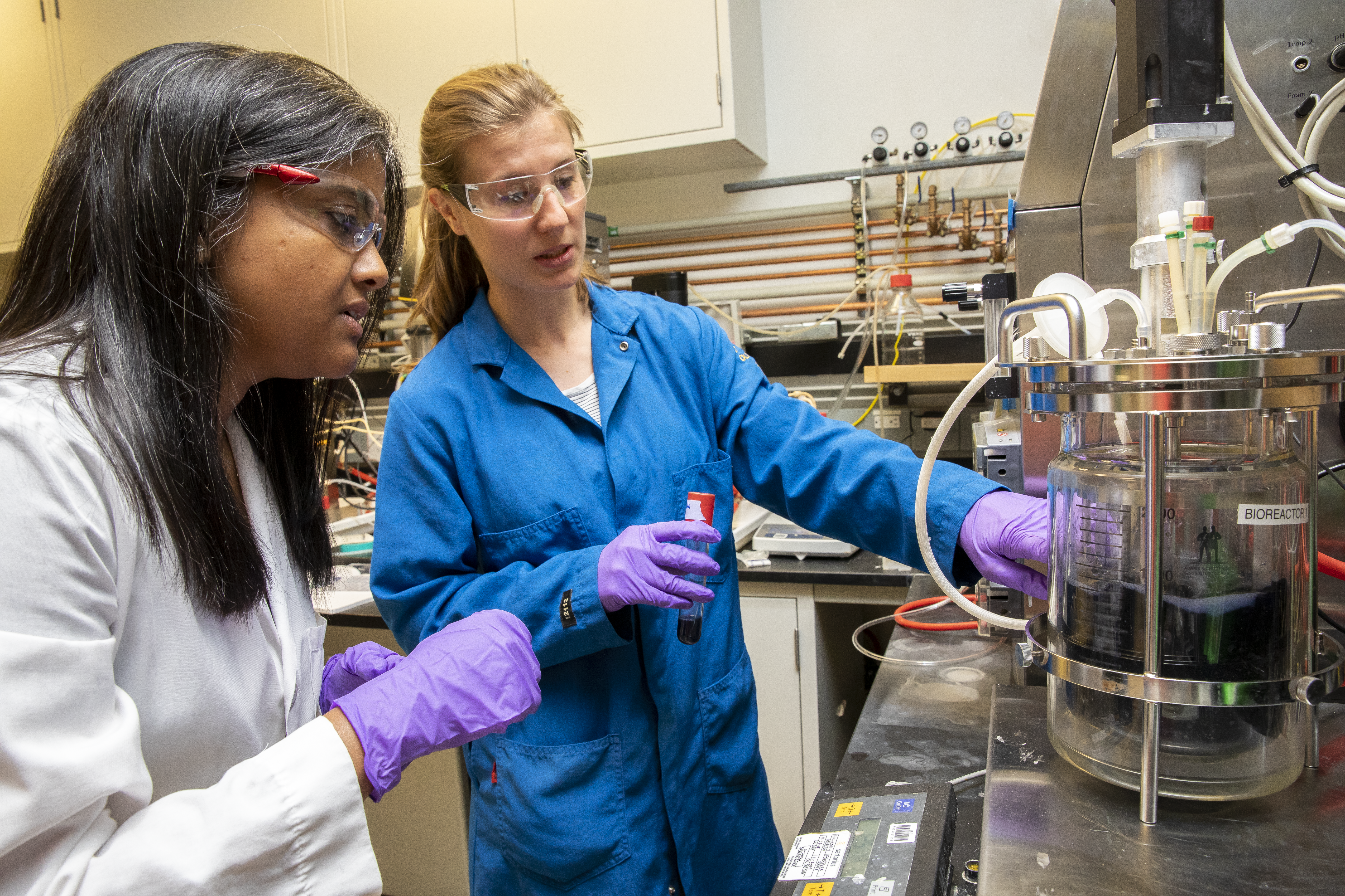 Aindrila Mukhopadhyay and Maren Wehrs inspect a bioreactor full of their Bluebelle strain at JBEI. (Credit: Marilyn Chung/Berkeley Lab)
